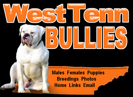 West Tenn Bullies - American Bulldogs - Breeder in Tennessee